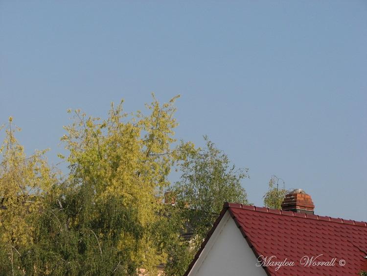 Ciel d'Alsace 332