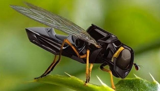 drone insecte