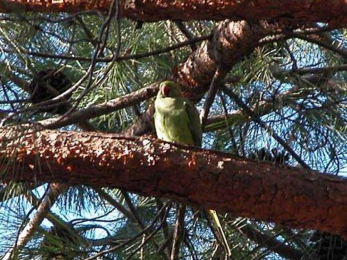 pappagalli15.jpg