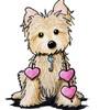 scotichdog