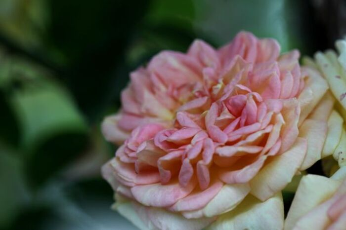 Sangerhausen Rosarium (6/7)