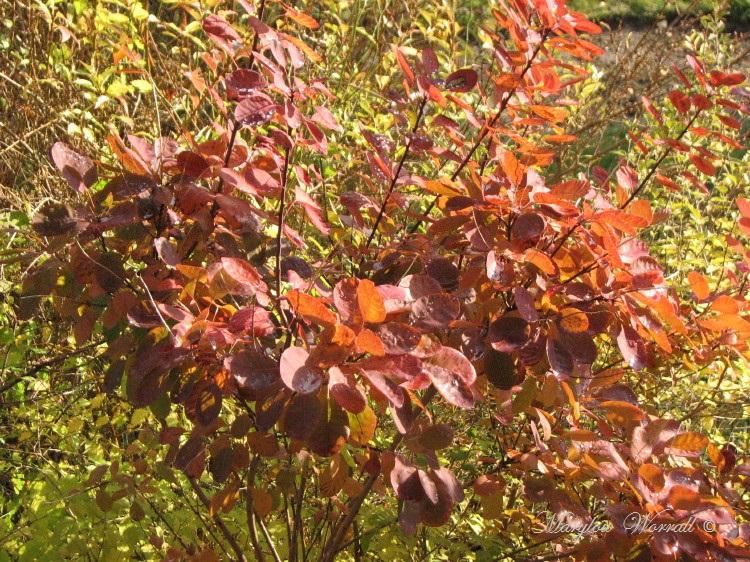 Les feuilles d'automne tombent en tourbillonnant