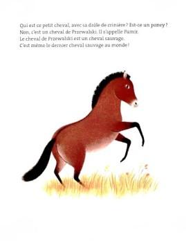 L-histoire-vraie-de-Pamir-le-cheval-2.JPG