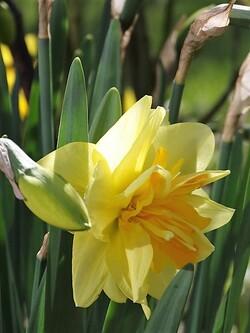 Vive le printemps!