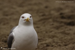 Diversité d'oiseaux 6 - 2014