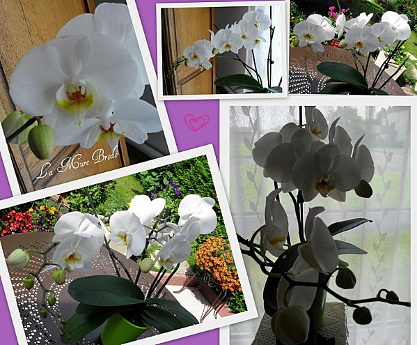 2012-07-22-orchidee---gigoin-m-inspire---mesanges.jpg