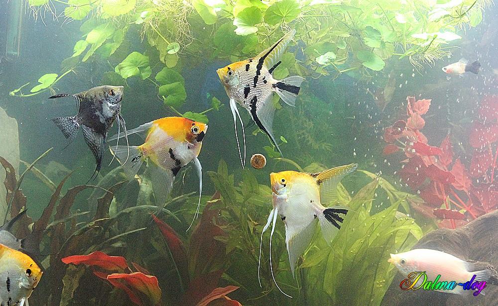 l' aquarium de nos amie Vincent et Aude
