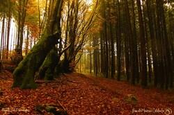 L'Allée des Géants ou Le chemin des sorcières