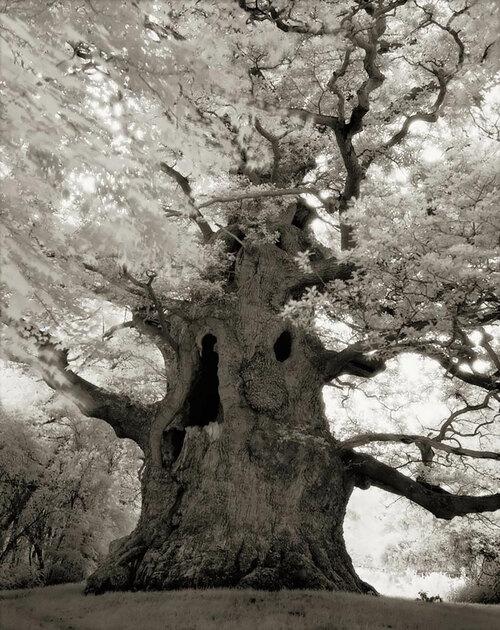 Les beaux vieux arbres de la planète