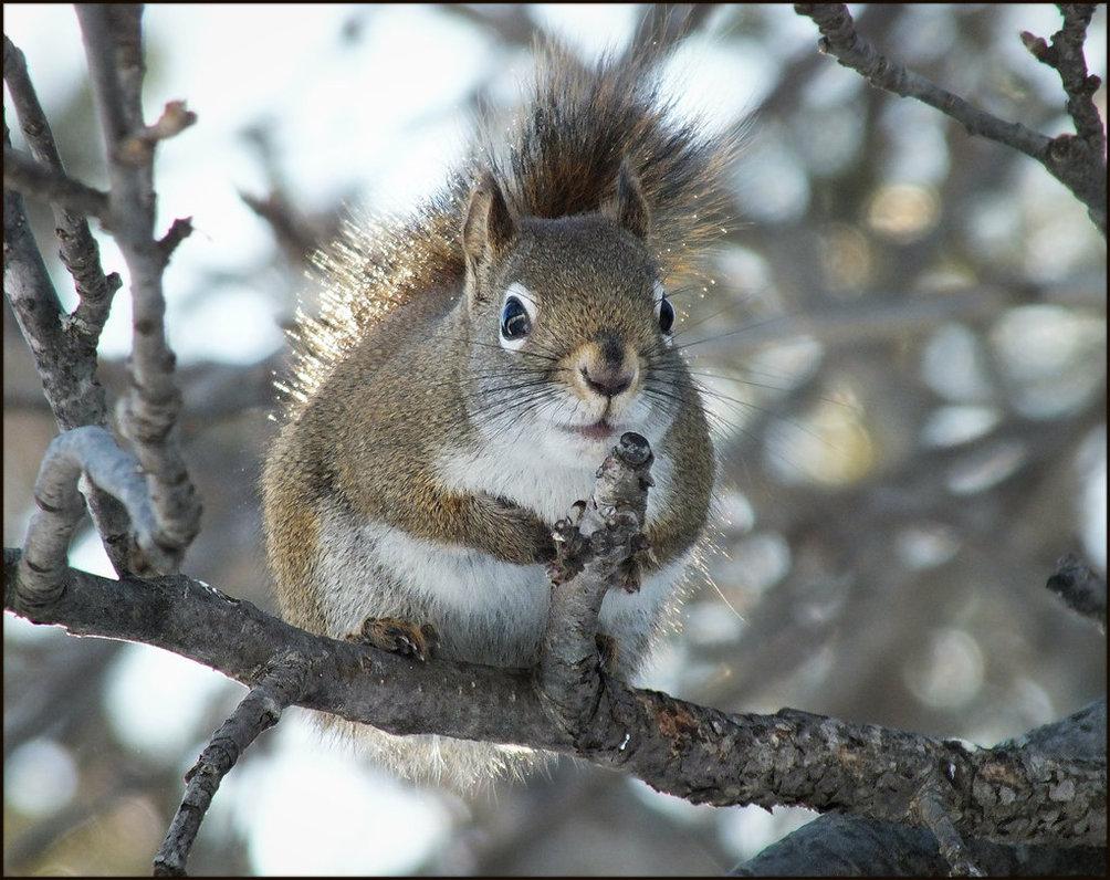 :  Sur ma branche vous observant