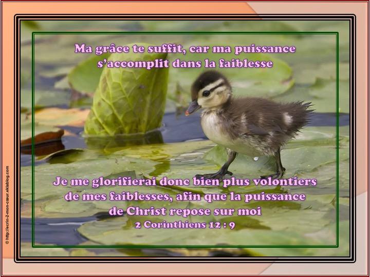 La puissance de Christ repose sur moi - 2 Corinthiens 12 : 9