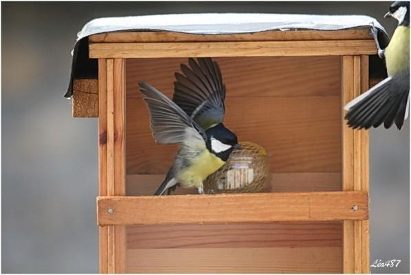 Oiseaux-3-3316-mesanges2.jpg
