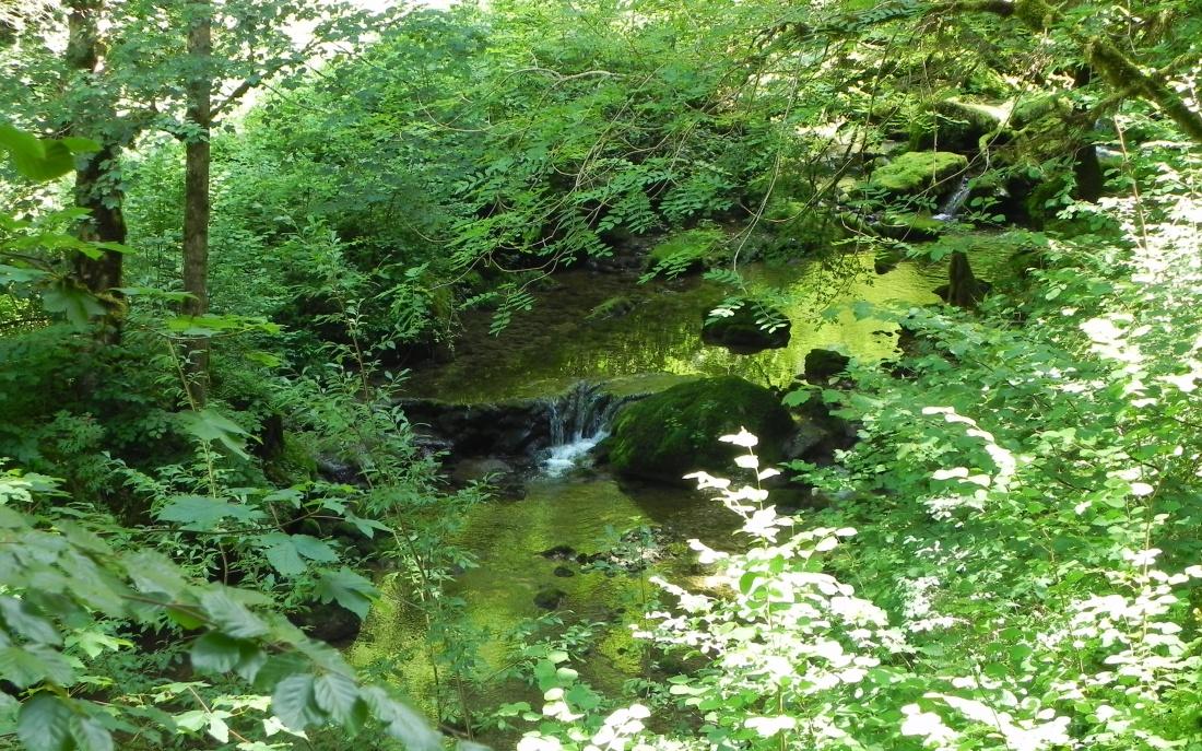 une rivière dans le Doubs
