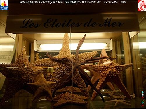 MUSEUM DU COQUILLAGE  14/14   vacances 10/ 2013  SABLES D'OLONNE    07/02/2014