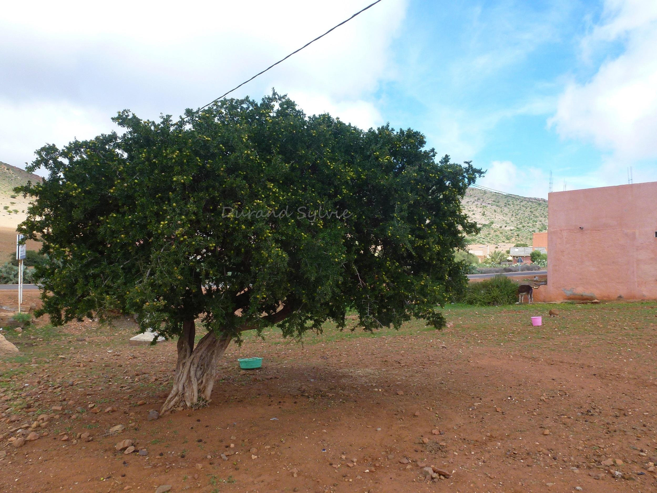 arbres ou arbrisseaux au point de croix