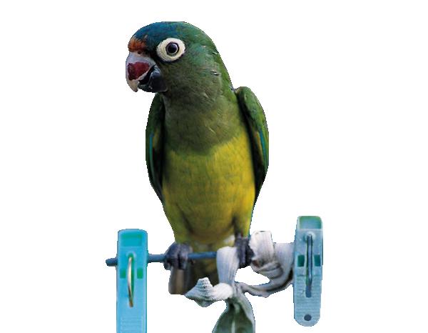 Mes tubes oiseaux