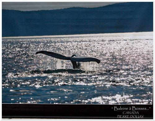 Une baleine bleue à Paris.