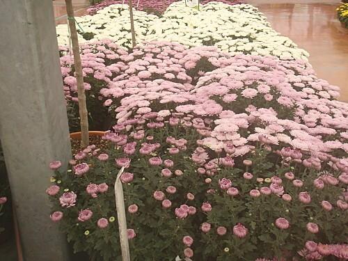 fleurs d automne 013