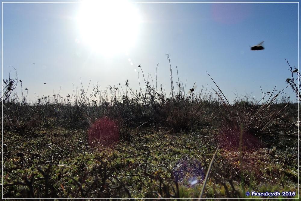 Port du Rocher et près salés est - La Teste de Buch - Février 2016 - 2/12