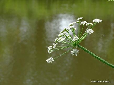 Pornic, Jardin botanique de la ria - Mai 2019