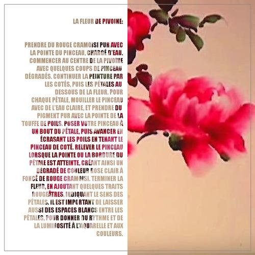 Dessin et peinture - vidéo 3388 : Les fleurs de pivoine et le vol du papillon 1/2 ? - peinture asiatique (japonaise et chinoise).