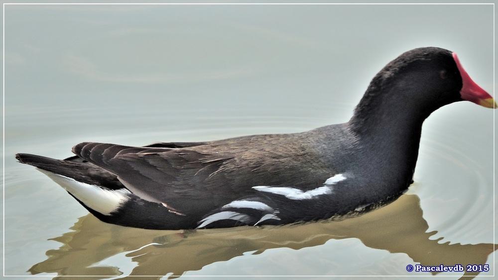 Réserve ornithologique du Teich (mars 2015) - 4/8