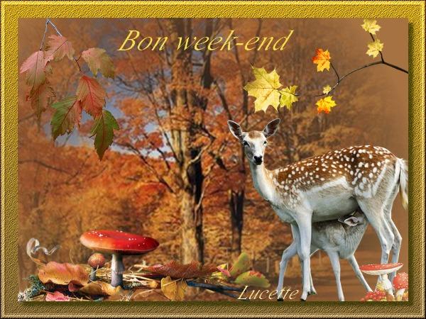 """Résultat de recherche d'images pour """"bon samedi automne"""""""