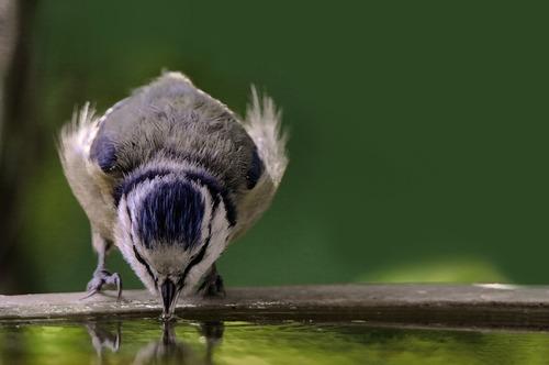 Canicule : Mettre de l'eau à disposition des animaux