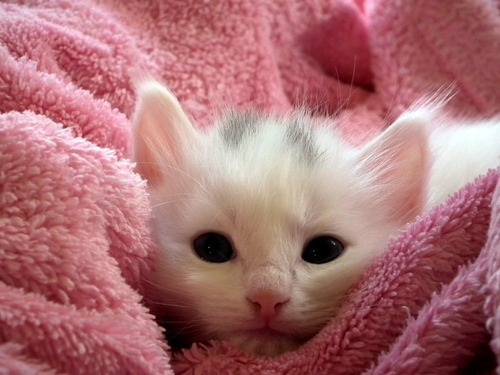 Save a Life - The best way to Care for an Orphaned Kitten