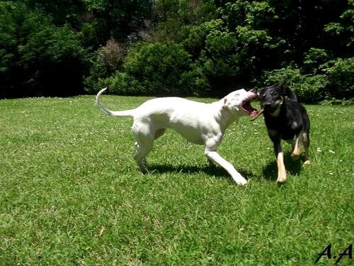 Cani roller et jeux