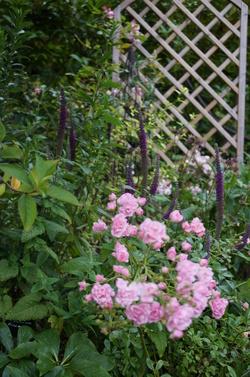 Seeds of Love 2015 : ma sélection