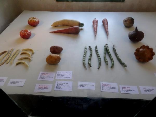 """""""Botanique entre Art et Sciences"""", une originale et superbe exposition au musée Buffon de Montbard."""