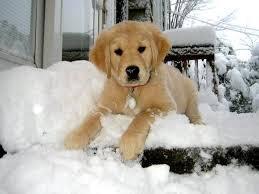 Milan dans la neige