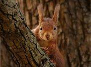 Regarder les animaux en forêt
