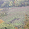le vignoble luxembourgeois