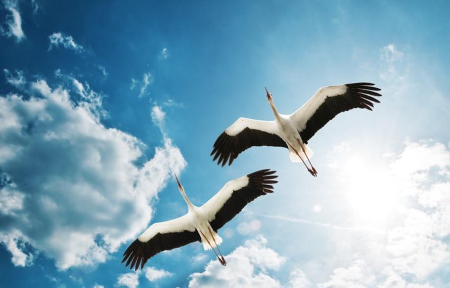 Images du monde : Regard sur les oiseaux