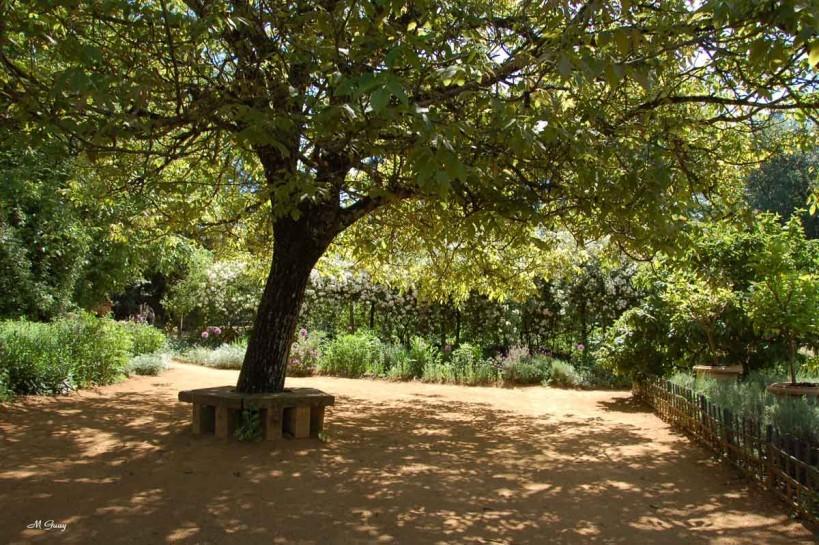 repos-sous-arbre-2757