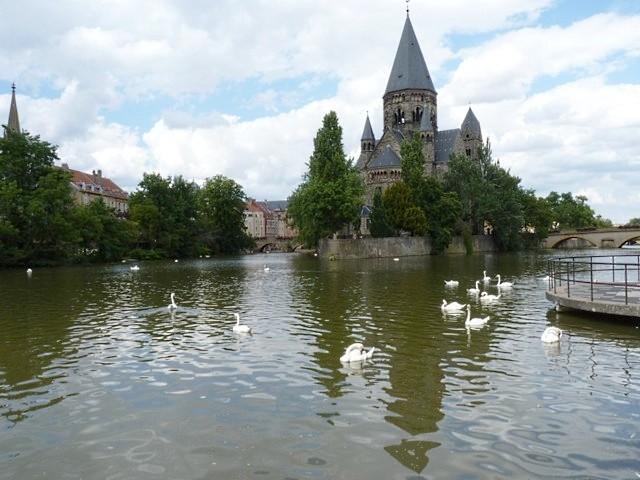 Metz les cygnes de la Moselle 1 été 2010