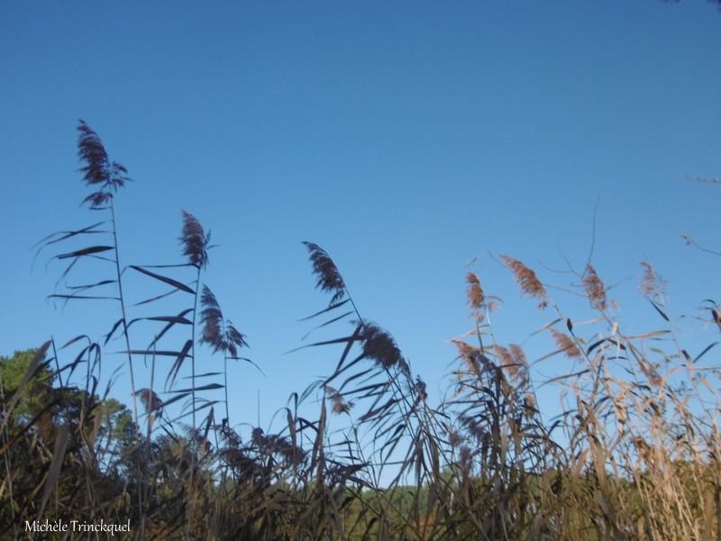 Une balade à l'Etang du Paludot à LEON (40), le 30 novembre (suite)...
