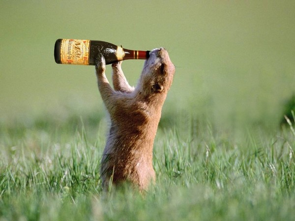Bonjour.....  la canicule, cela donne soif  .....