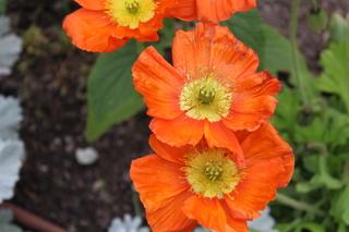 Fleurs serres municipales