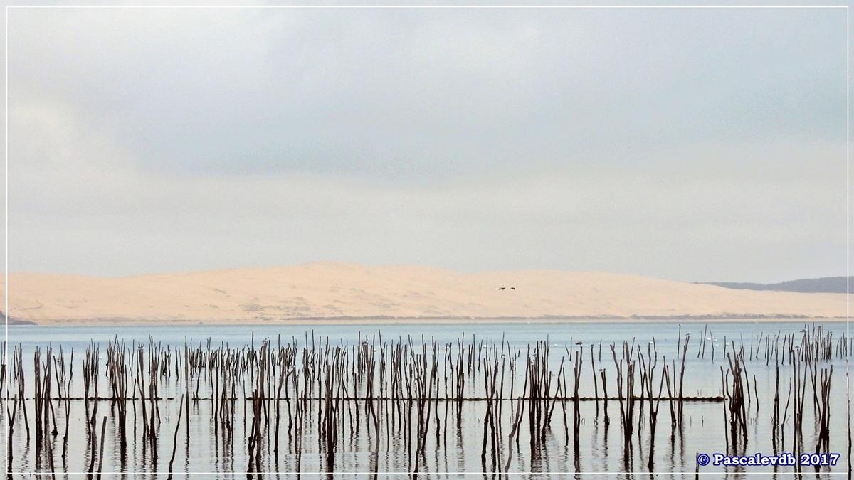 Traversée du Bassin entre Arcachon et le Cap Ferret - 10/14