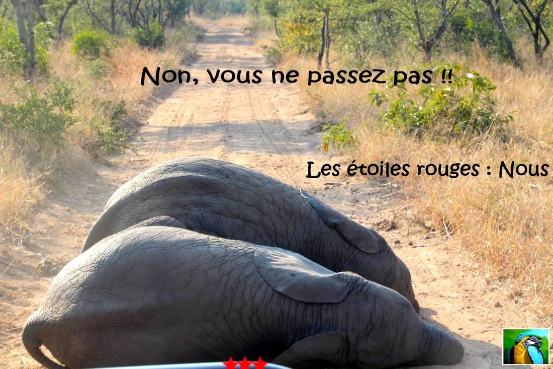 Afrique du Sud : juin 2018 bébés éléphants 3 /3
