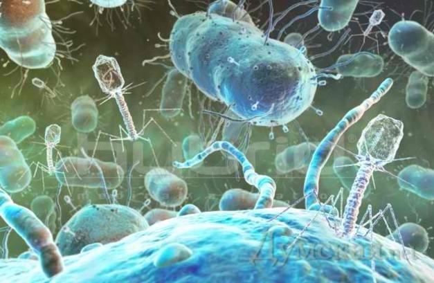 Les phages passent à l'attaque !