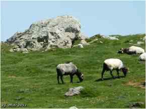 (J51) Roncesvalles /Orisson 25 mai 2012 (2)