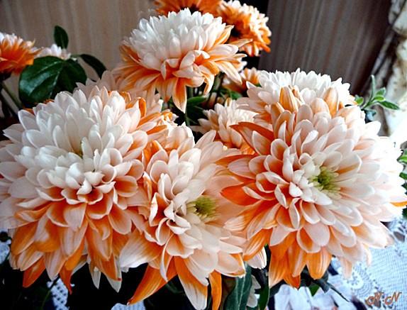 floralie-dahlia.jpg