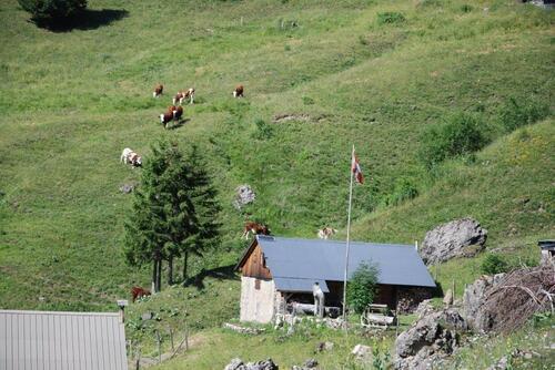 Quelques belles vaches