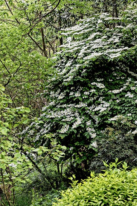Le Jardin de Liliane en mai