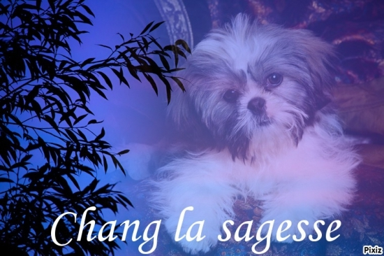 montage-for-chang-la-sagesse_3913478-L