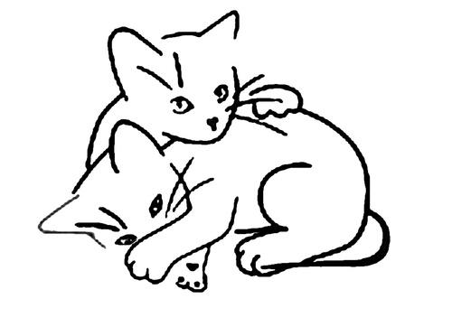 Une jolie  petit chatte